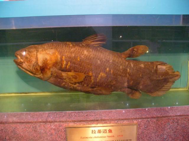 beijing95