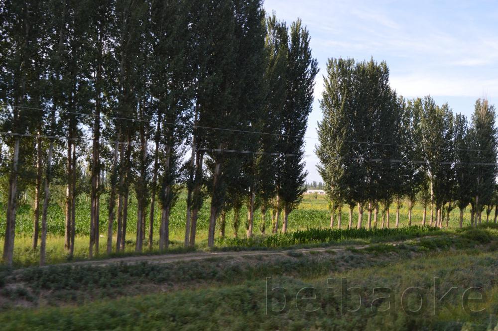 sichouzhilu2012_033