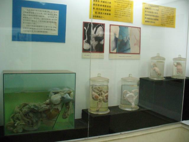 sichuan113
