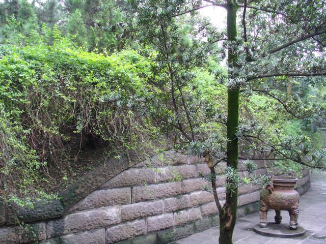 sichuan141