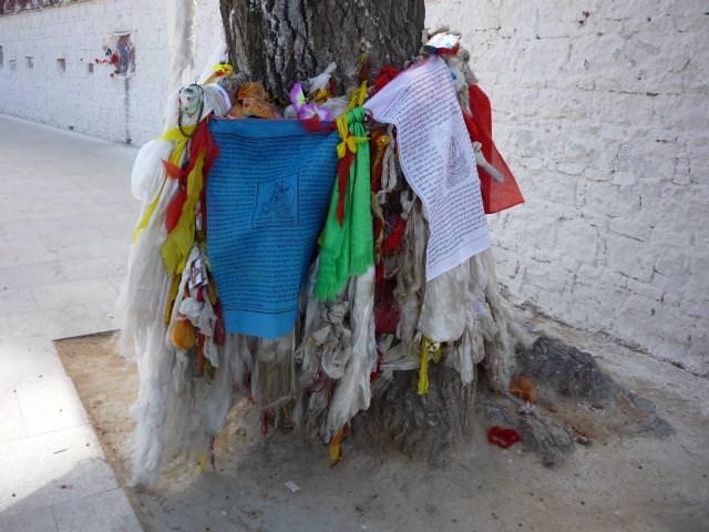 tibet_081