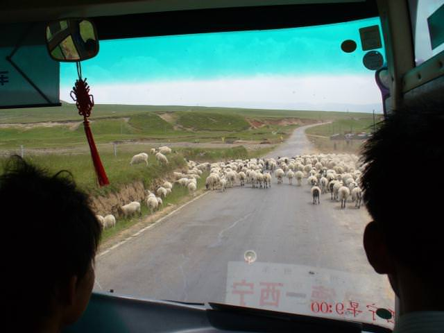 tibet_bunkaken102