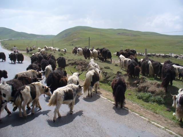 tibet_bunkaken106