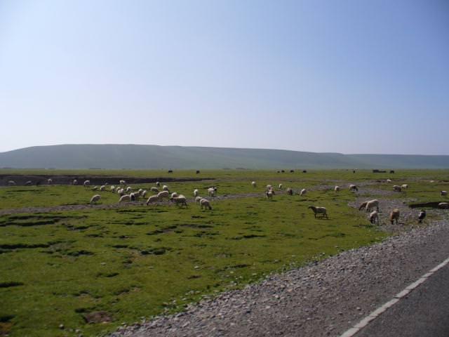 tibet_bunkaken118