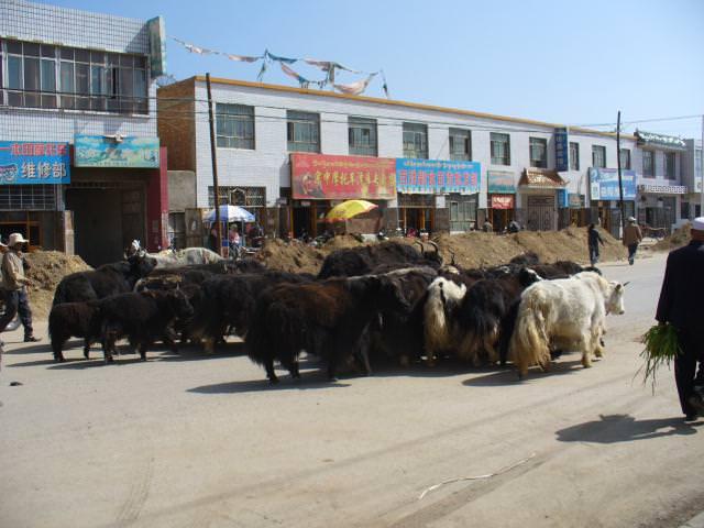 tibet_bunkaken120