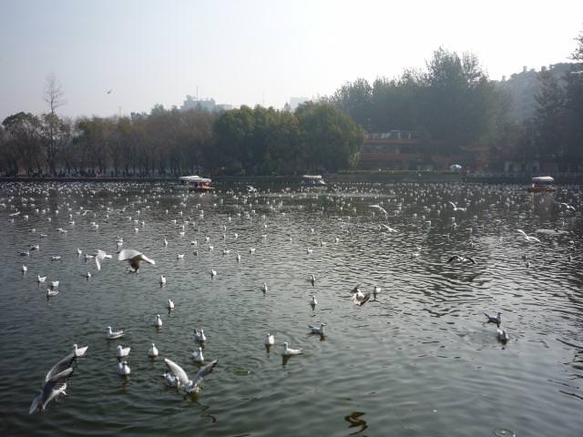 yunnan4_119