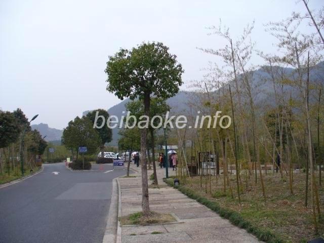 shaoxing28