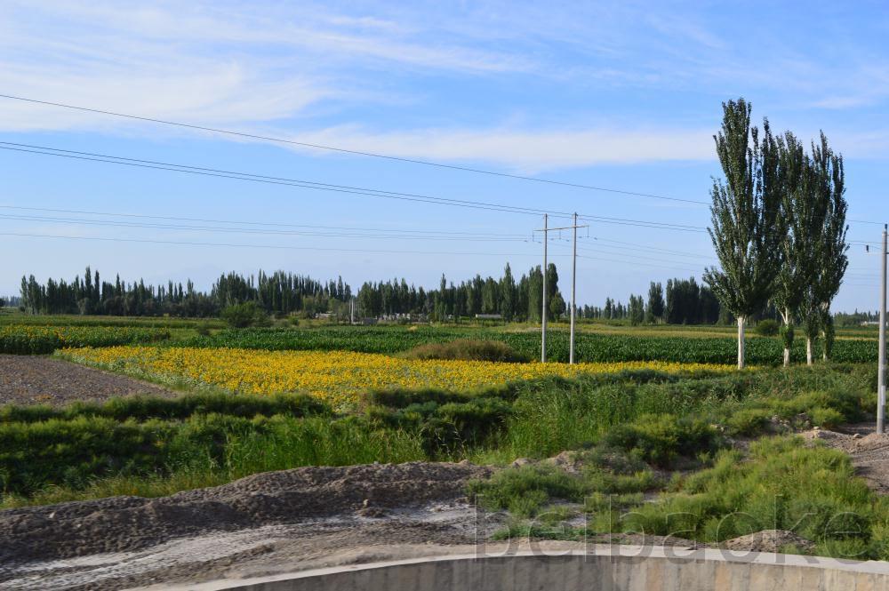 sichouzhilu2012_034