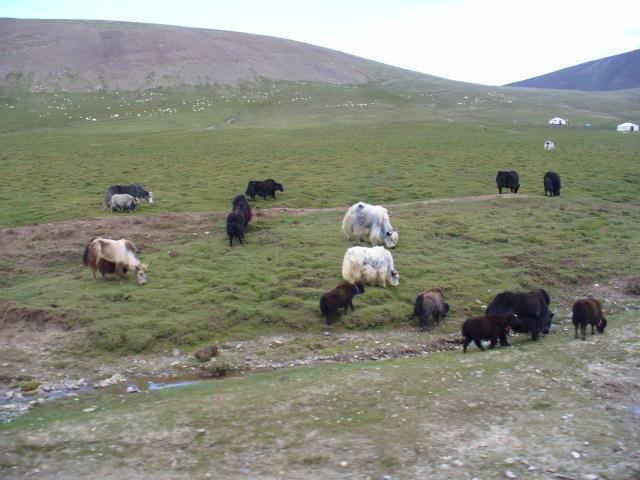 tibet_bunkaken088