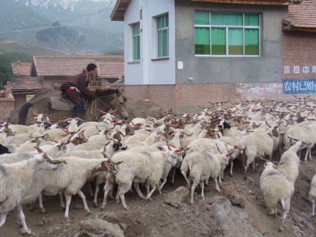 tibet_bunkaken169