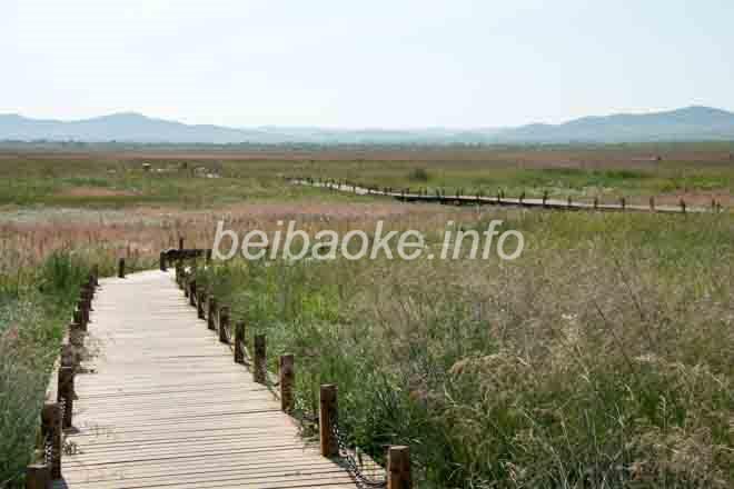 金蓮川草原